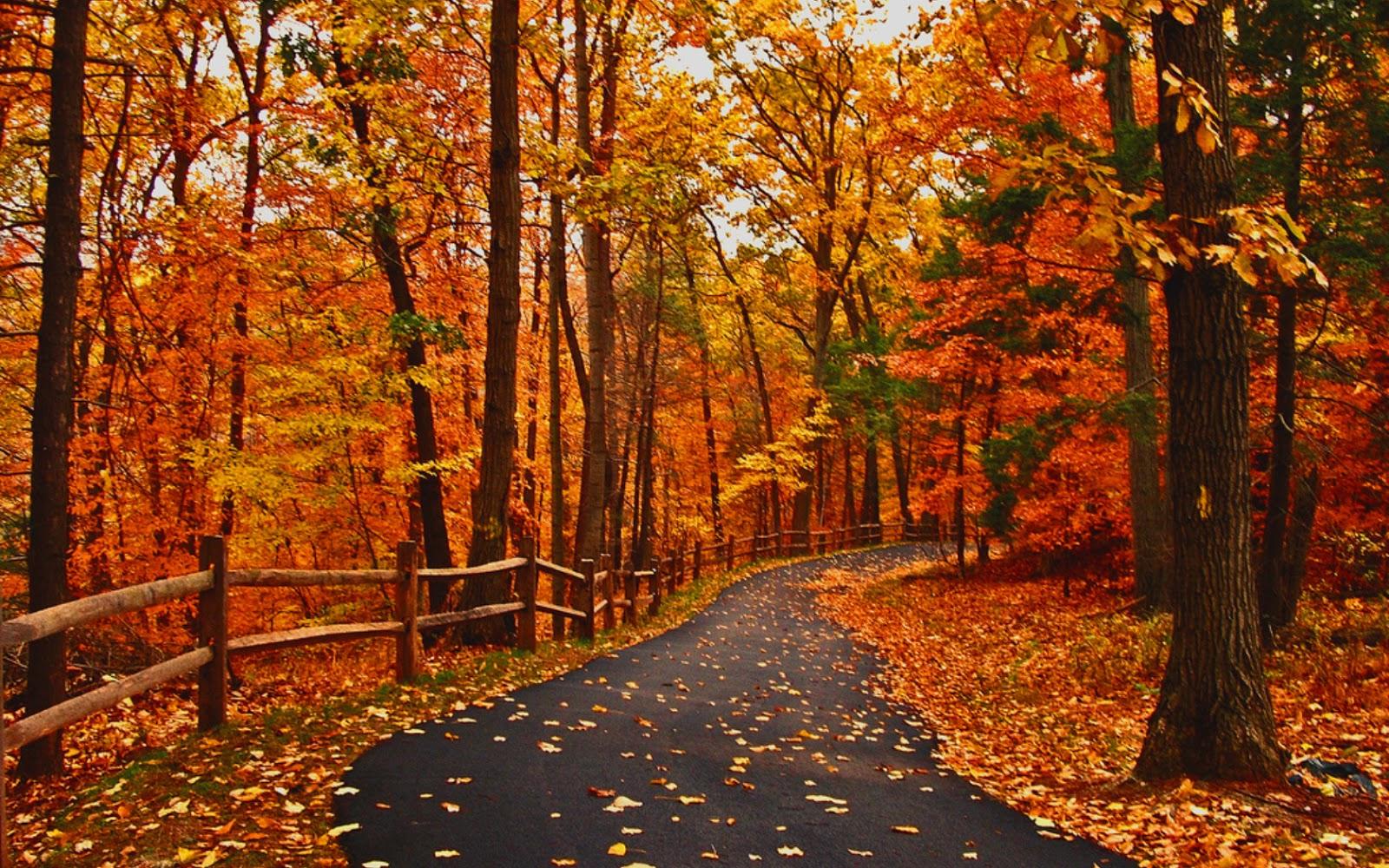 autumn_road_nice_leaves_pretty_landscape_colors-hd-wallpaper-469011